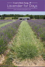 Lavender For Days – Bucks County, PA
